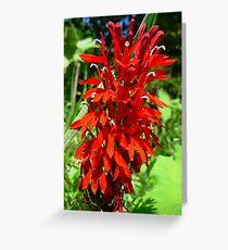 Wild Cardnal Flower Greeting Card