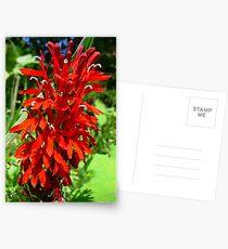Wild Cardnal Flower Postcards