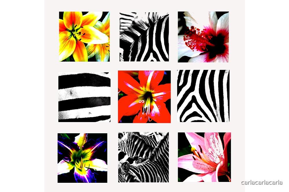 Zebra Flower montage by carlacarlacarla