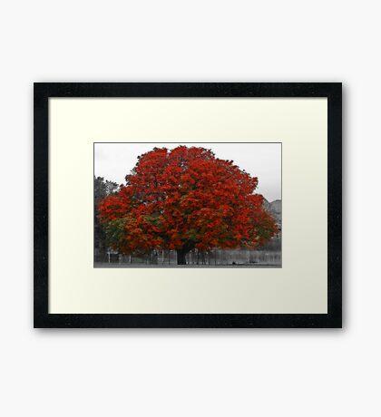 Chestnut Tree II Framed Print