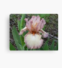 "Bearded Iris - ""Behind Closed Doors"" Canvas Print"