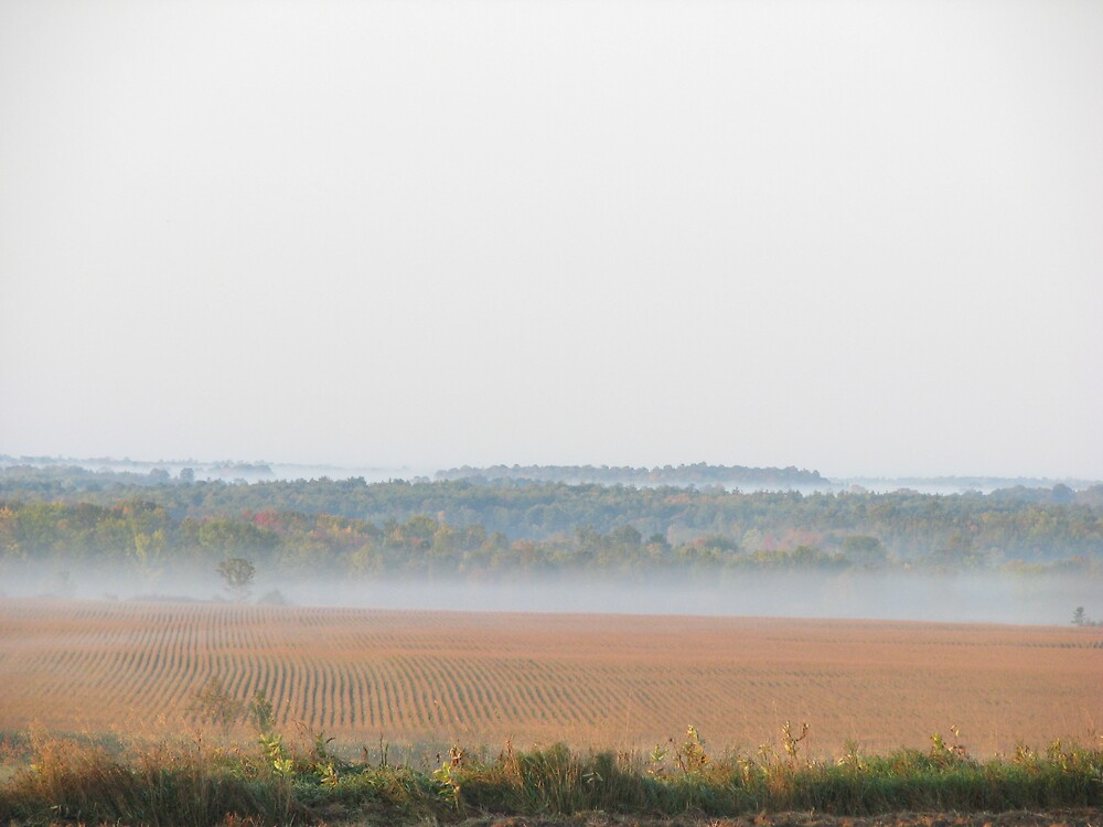 Mist on a Cornfield by JohnEvans
