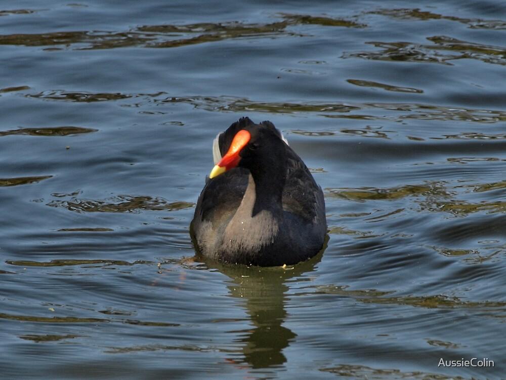 FLOATING IN SERENITY by Colin Van Der Heide
