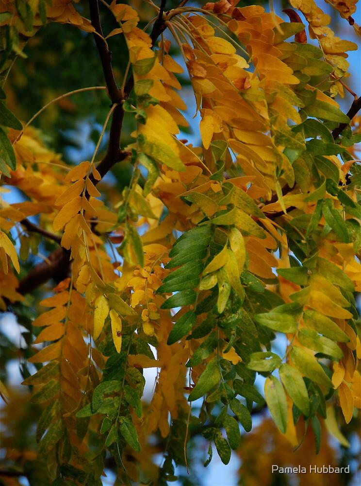 Season Of Change II by Pamela Hubbard