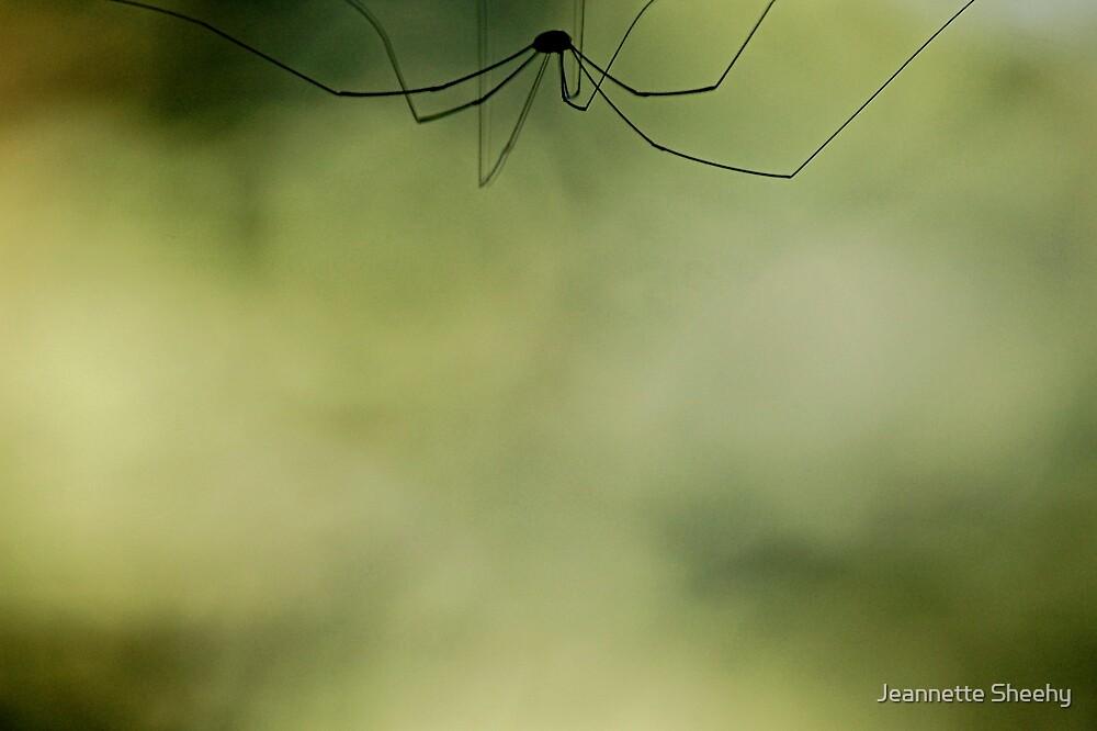 Long Legs by Jeannette Sheehy