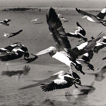 Flying Pelicans by Kelwin