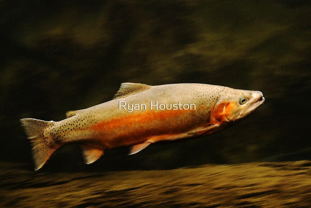 Rainbow Trout - Underwater Log by Ryan Houston