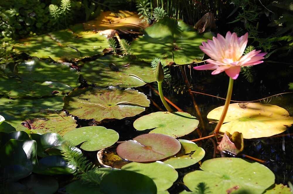 butterfly garden in DC by dbcarolinagirl