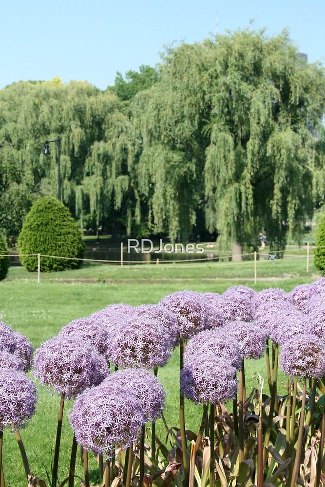 Purple Flowers by RDJones