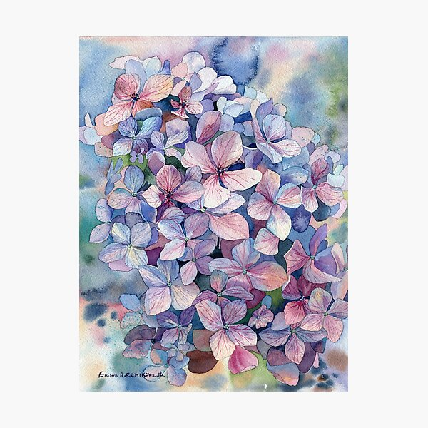 """""""Hydrangea"""" Photographic Print"""