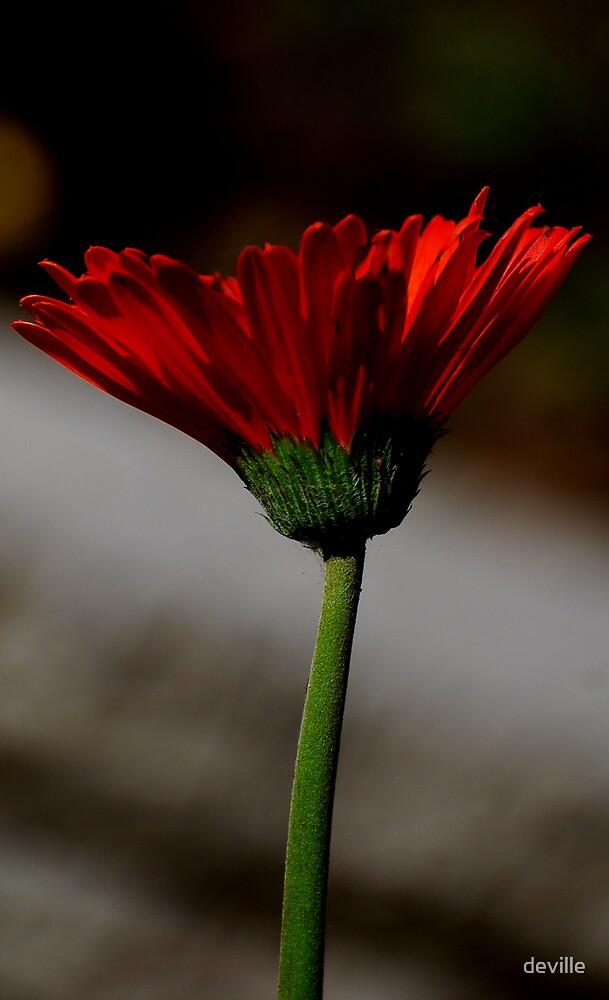 a pretty wall flower by deville