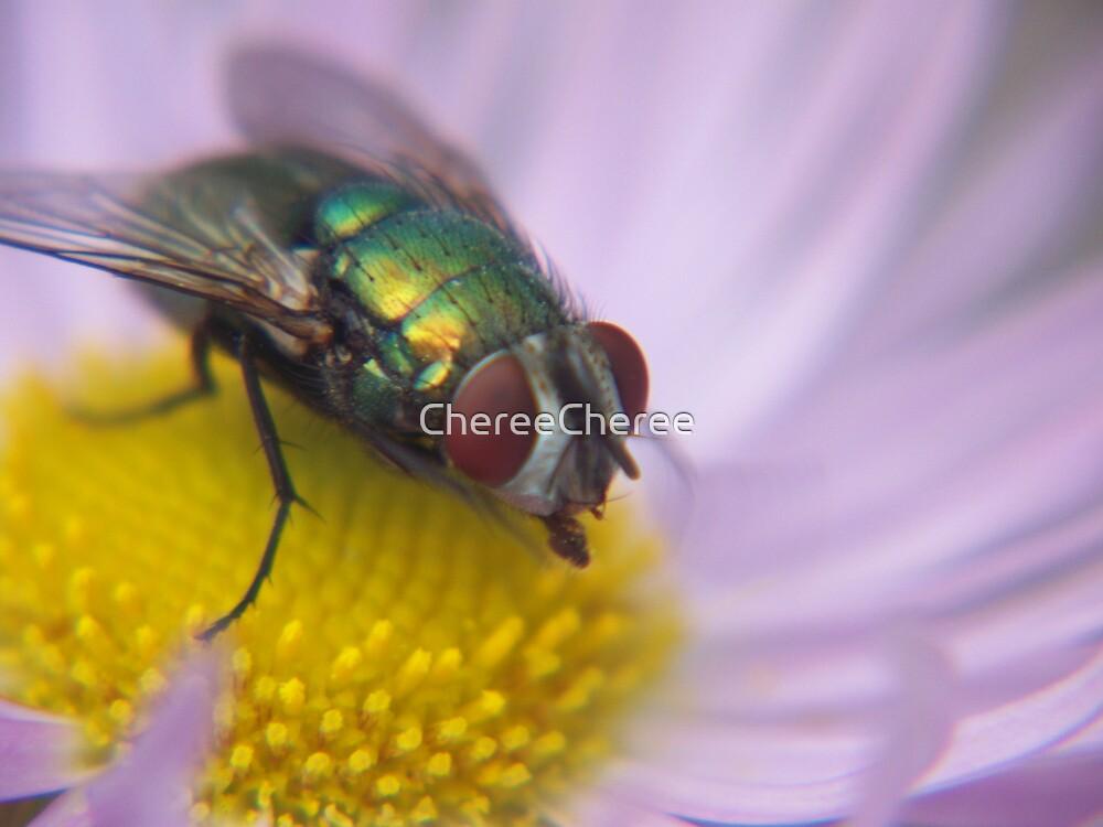 Autumn Bottleneck Fly by ChereeCheree
