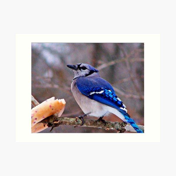 Bluebirds and Bagels Art Print