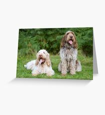 Italian Spinoni  Dogs ~ Annabelle and Thane  Greeting Card