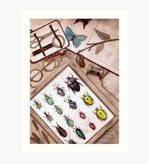 Insect Collector Art Print