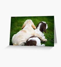 Orange and White and Brown Roan Italian Spinone Puppy Dogs Greeting Card