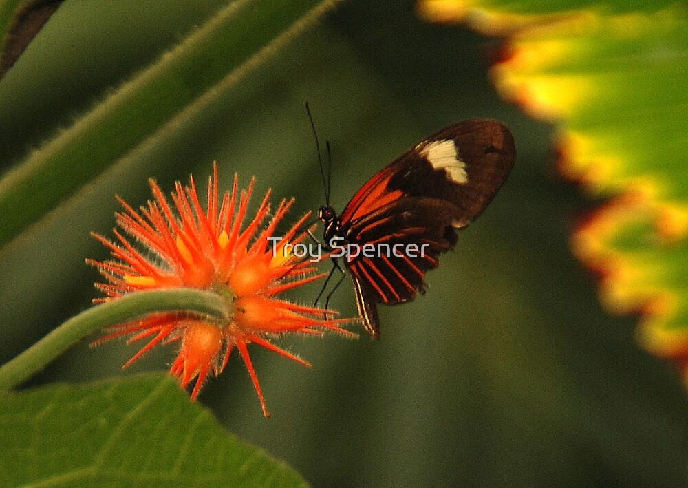 Orange Blossom Special by Troy Spencer