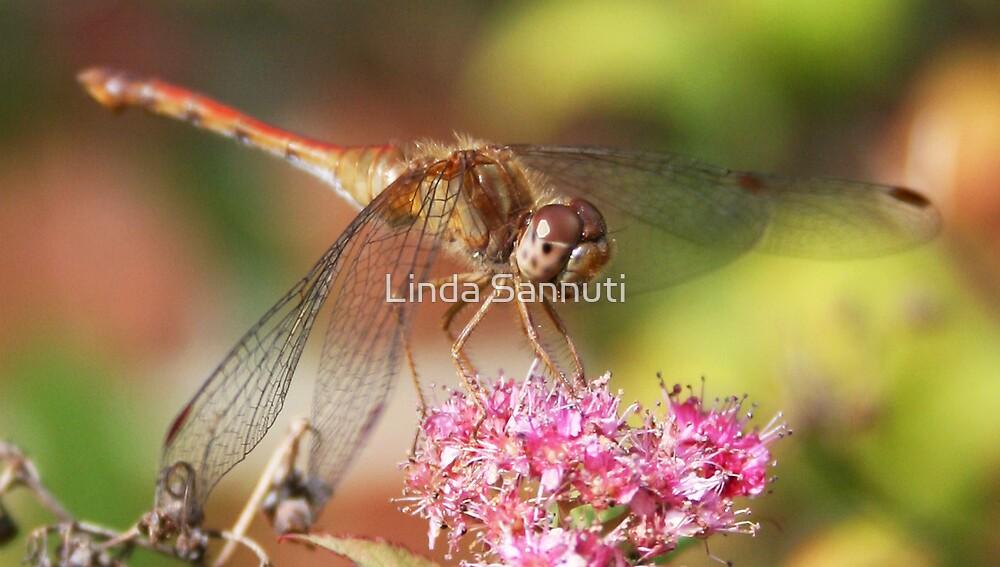 Dragonfly 2 by Linda Sannuti