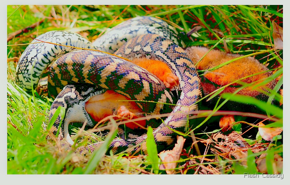 """Natures gruesome reality eaten alive by Phineous """"Flash""""   Cassidy"""