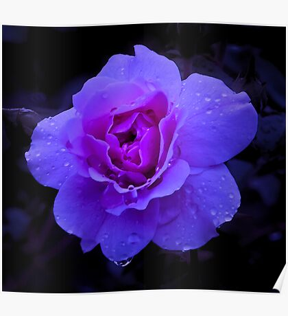 Purple Rose Challenge Poster