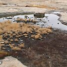 Pool on Mount Arabia by Jon Julian