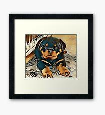 Rottweiler Pup Framed Print