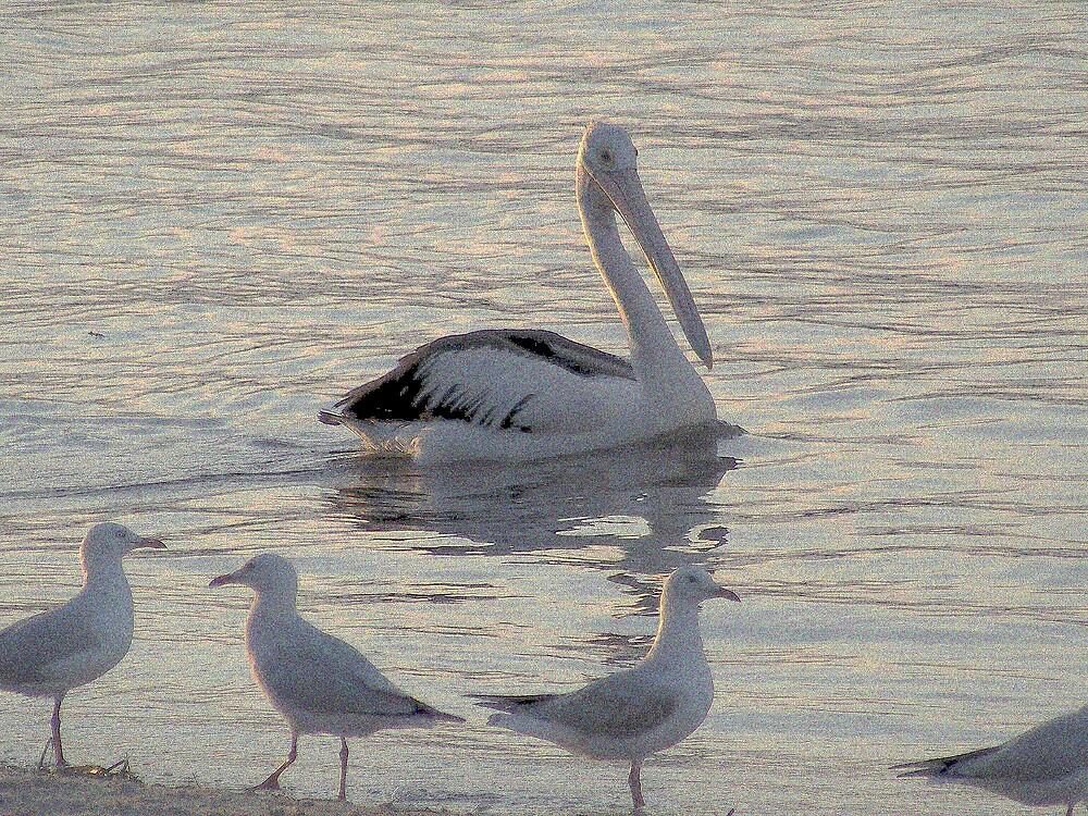 pelican surpriser by Eamonn Doyle