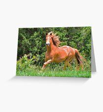 Nevada - My Neighbors Horse Greeting Card