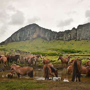 Wild horses on Easter Island by olarty
