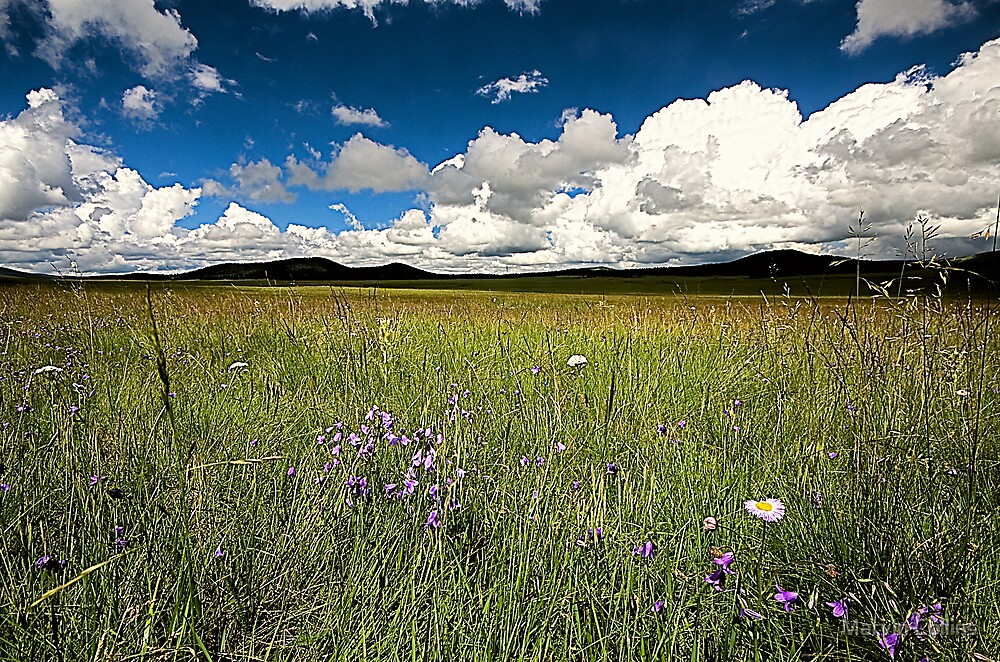 Wildflowers by Marvin Collins