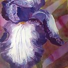 Bearded Lady Purple Iris by Estelle O'Brien