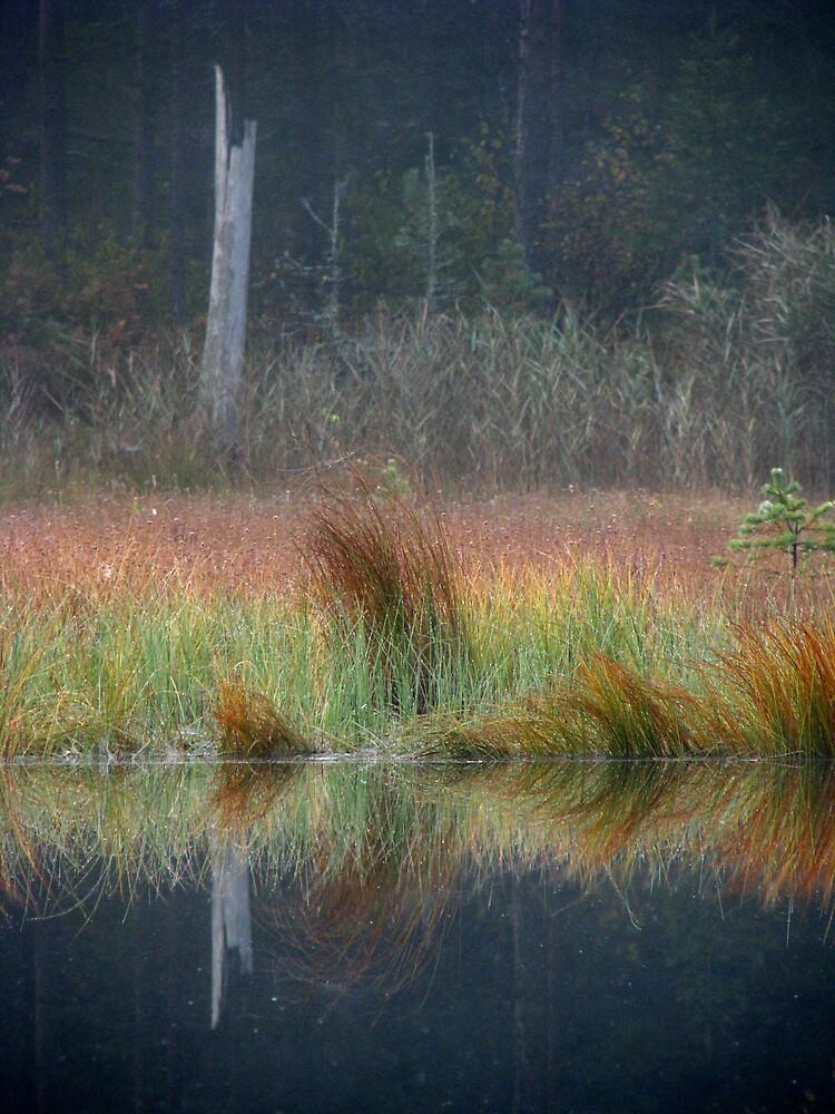 'Dead standing tree' by Petri Volanen