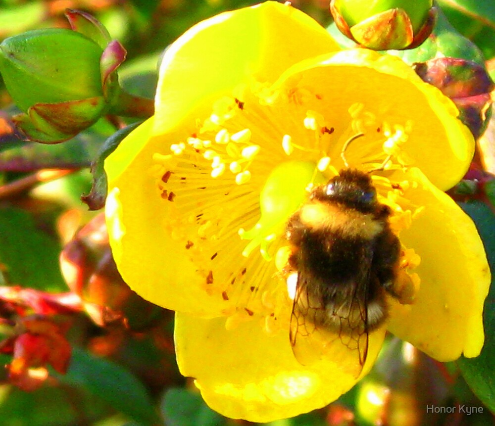 Bumblebee  by Honor Kyne