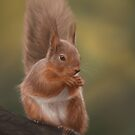 Red Squirrel by Nat Titman