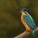Kingfisher by Nat Titman