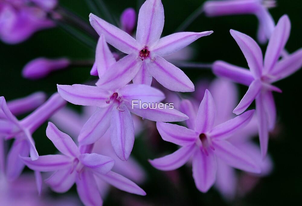 Stars in my eyes by Flowers