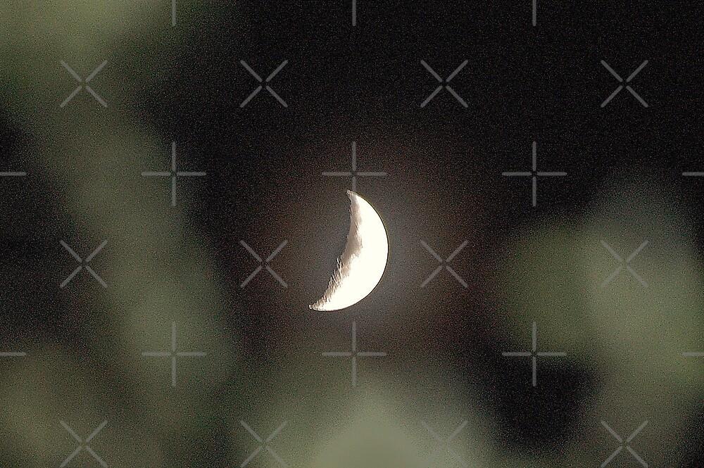 Moon which seems lonely by loiteke