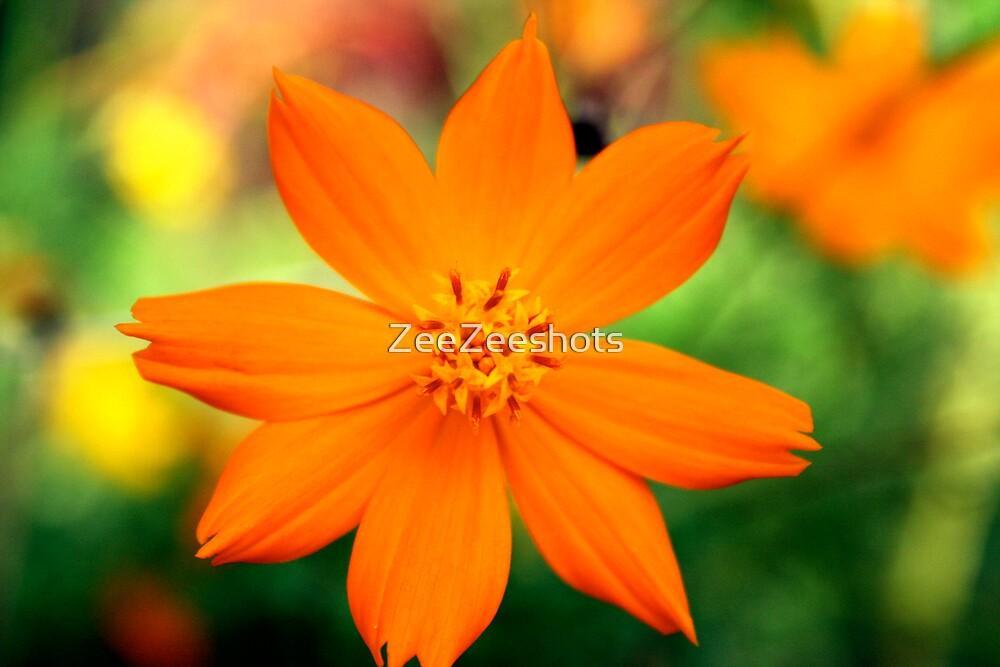 SO Orange by ZeeZeeshots