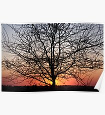 Sunset at the Farm Poster