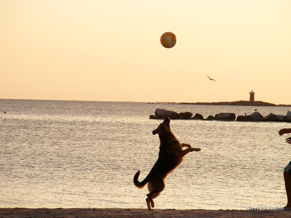 Dog Ball  Seagull Boy by daviddonabie