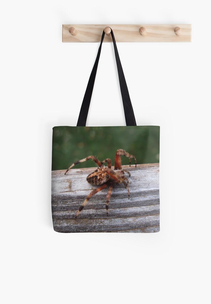 cool spider by melynda blosser