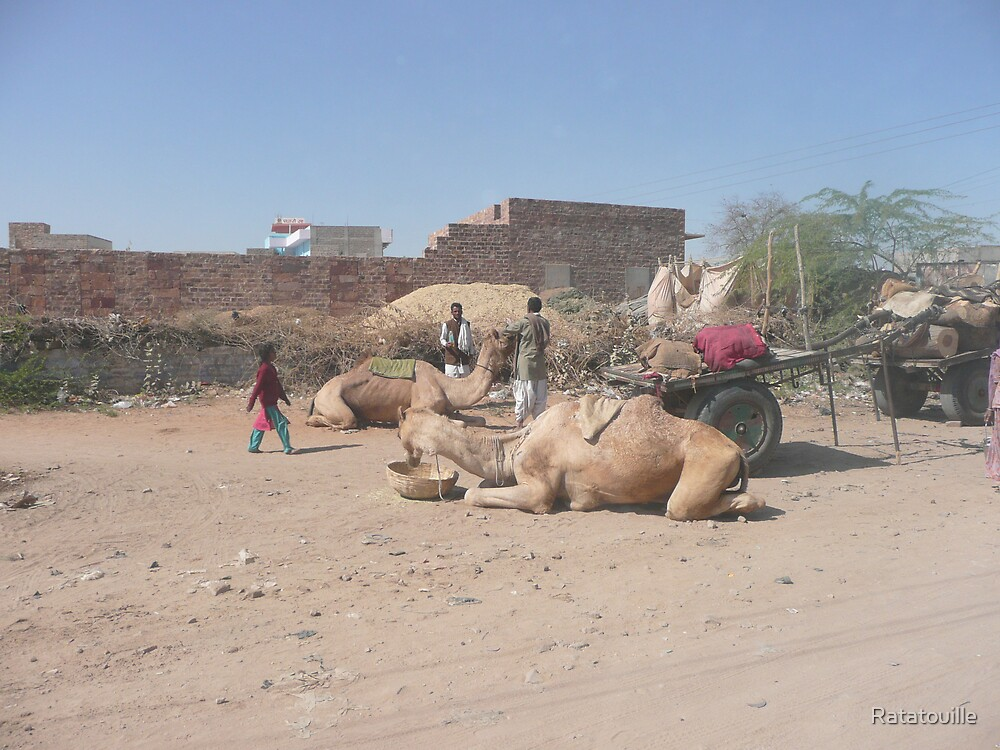 Camel rest in Jaipur by Ratatouille