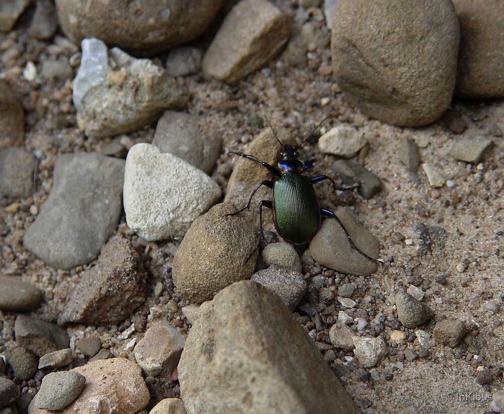 Green Scarab by InKibus