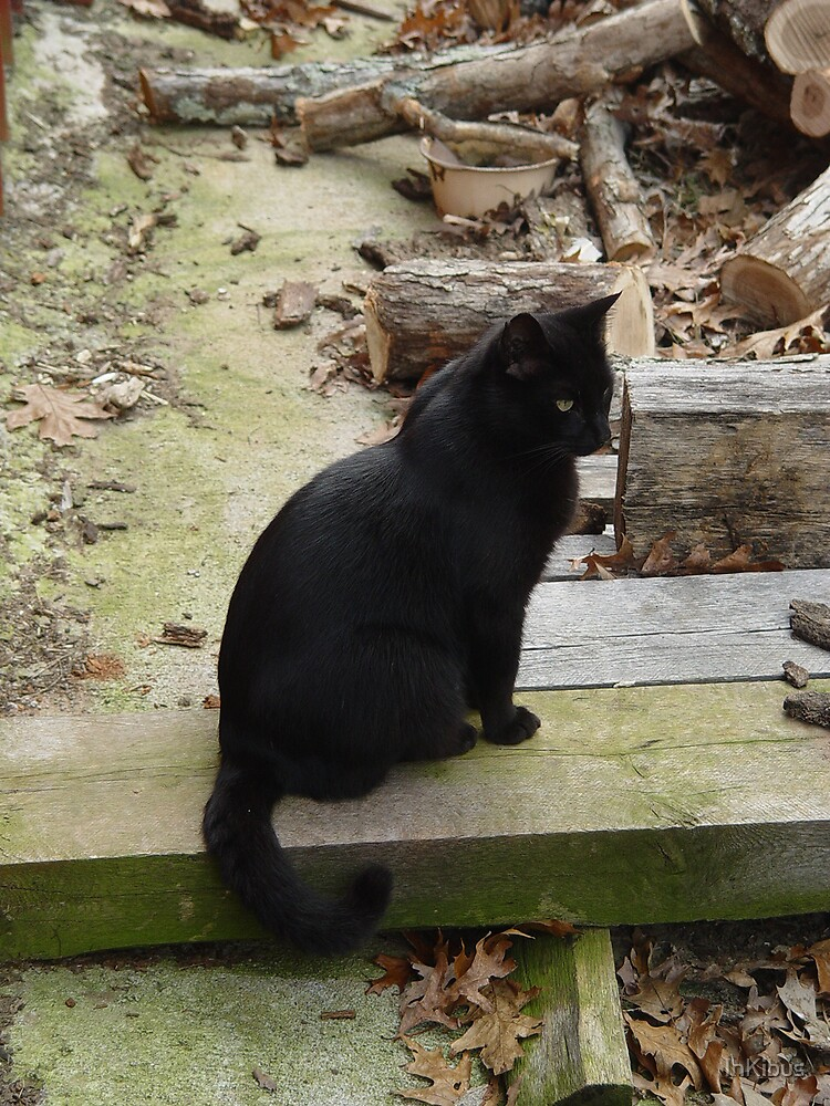 Black Cat by InKibus