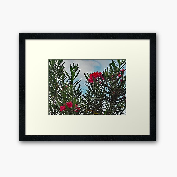 Roter Oleander Gerahmter Kunstdruck