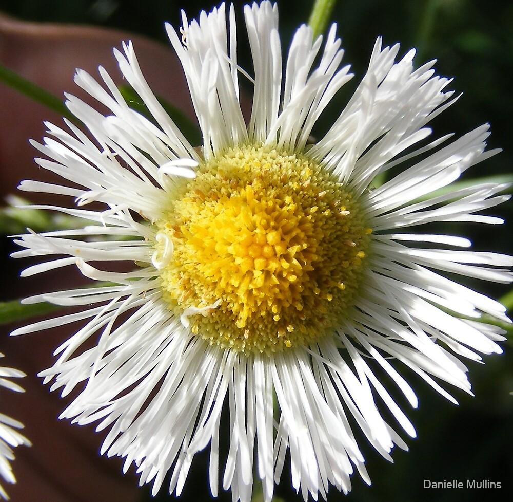 flower by Danielle Mullins