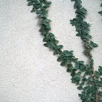 Ivy by doodlequeen27