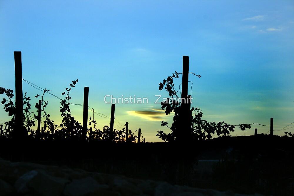 The vineyard by Christian  Zammit