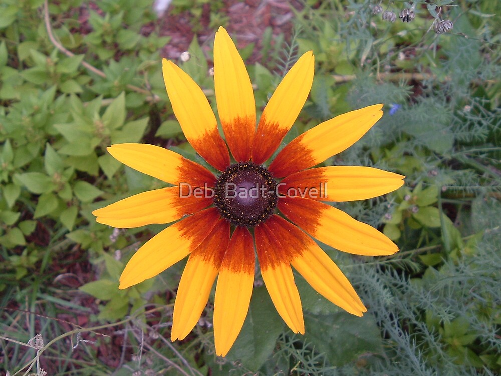 Crazy Daisy by Deb  Badt-Covell