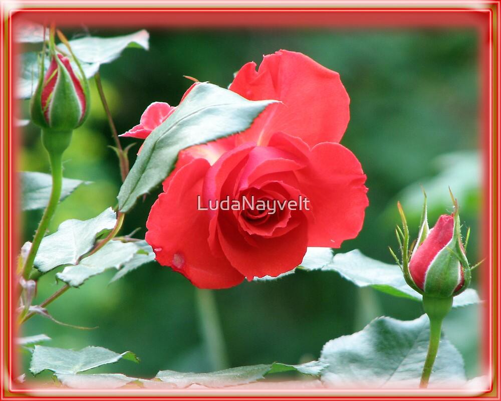 Flowers of love by LudaNayvelt
